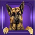 App de perros